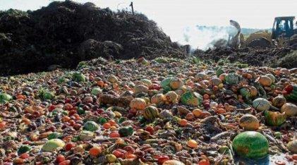 Irracionalidad capitalista: se desperdicia 31% de los alimentos en el mundo
