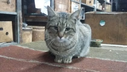 Ningún gato nace Macri