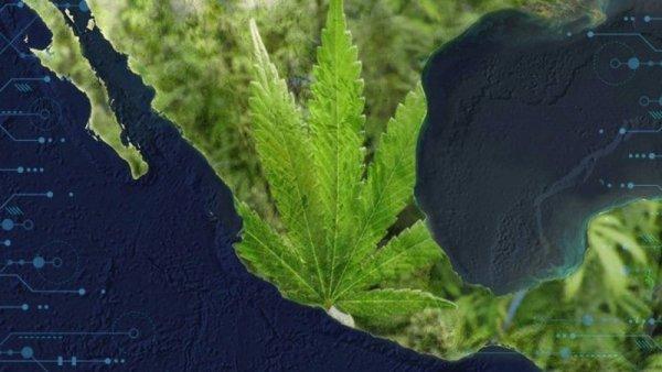 Diez claves de la legislación sobre marihuana en México